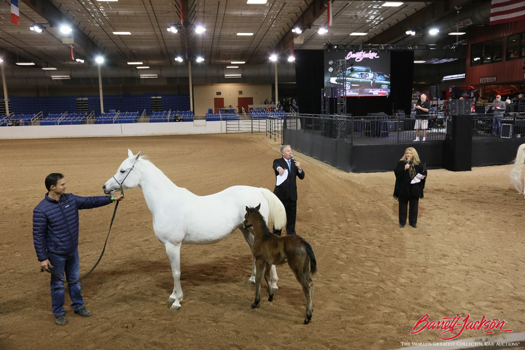 Guests could learn about Arabian horses during a special exhibition the last weekend of the auction.